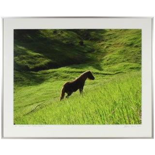 "Gaétan Caron ""Stallion in Green Meadow"" Mendocino, California Landscape With Wild Pony 2010 For Sale"