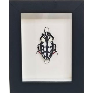 Hand-Made Murano Glass Beetle by Emanuel Toffolo For Sale