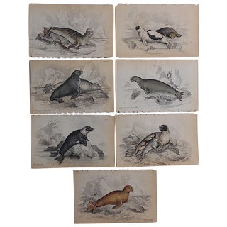 Antique Hand-Colored Seal Engravings - Set of 7 For Sale