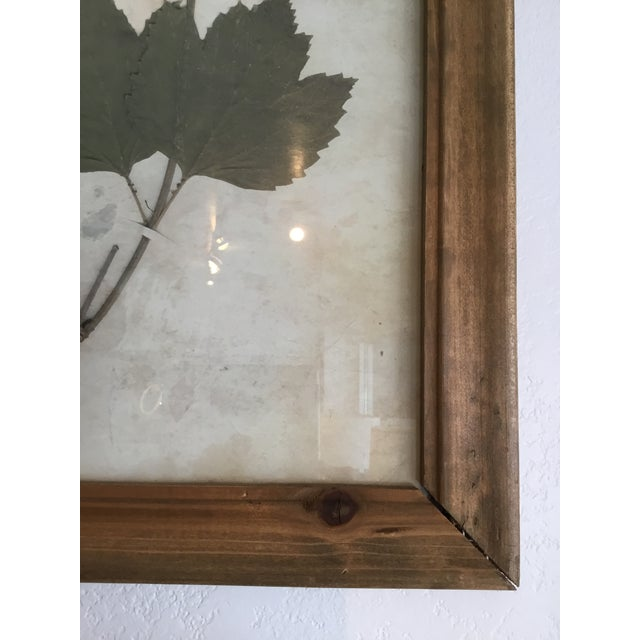 Botanical Prints in Reclaimed Wood Frames - A Pair
