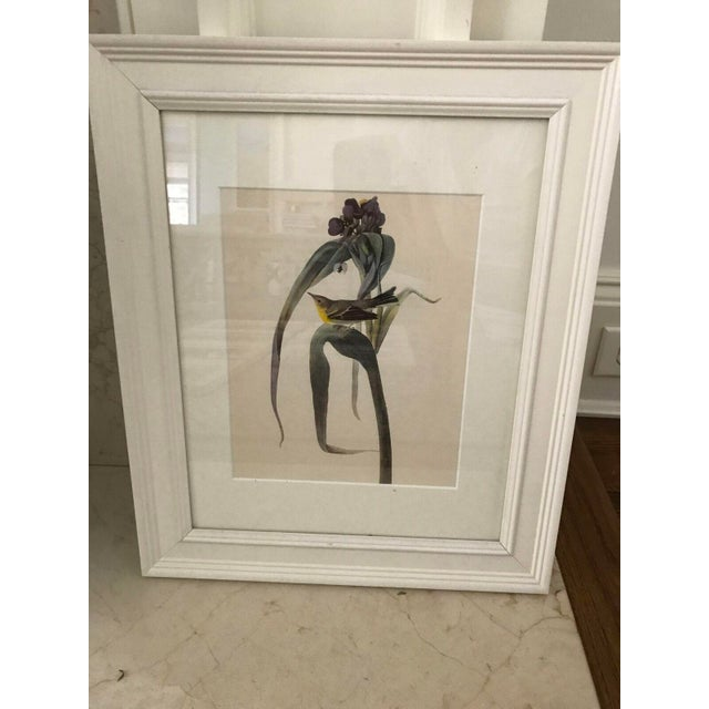 Framed Vintage Bird Prints - Set of 8 - Image 10 of 11