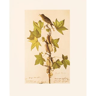 1966 Traill's Flycatcher by John James Audubon, Cottage Style Vintage Print For Sale