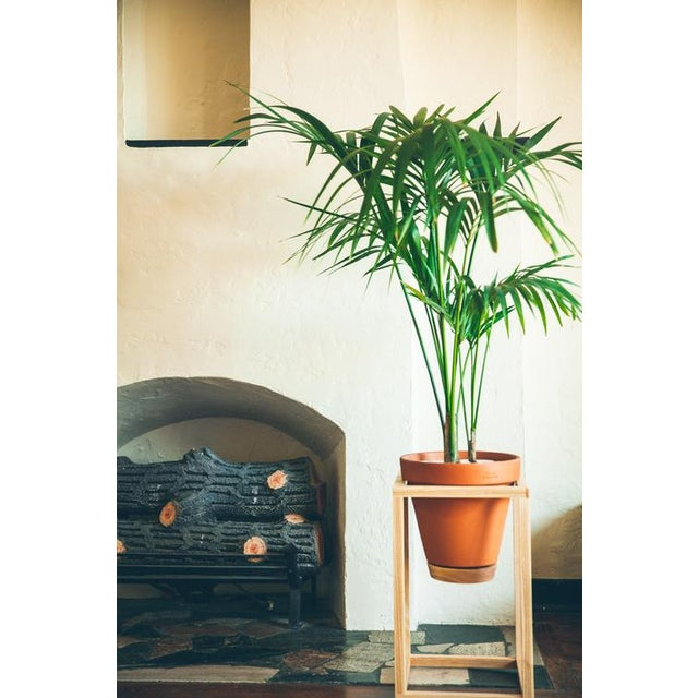 The Tall Frame Planter is an indoor planter made of an American white ash structure, a terracotta pot, and a plastic lined...