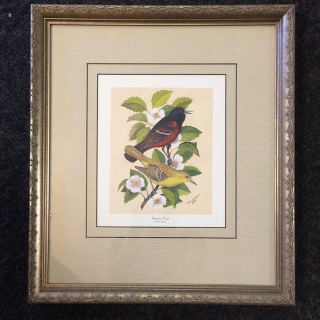 Vintage Earl O Henry Bird Prints - 4 Framed Prints For Sale - Image 4 of 13