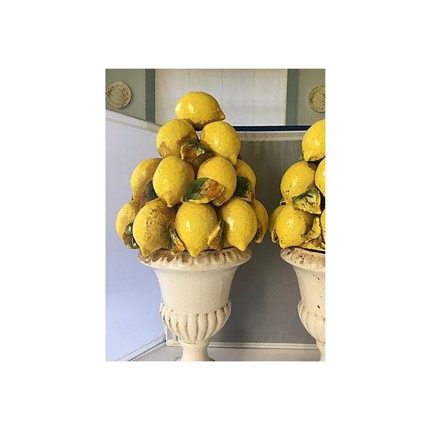 Italian Lemon Topiaries - A Pair For Sale - Image 4 of 5