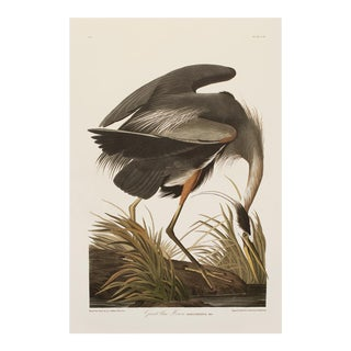1990s Great Blue Heron by Audubon, Large Chinoiserie Style Print For Sale