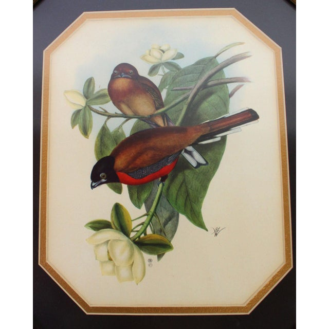 Pair of framed vintage ornithological prints of the original lithographs. Toned paper full color prints double-matted in...