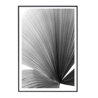 """Palm Frond #2"" Unframed Photographic Print For Sale"