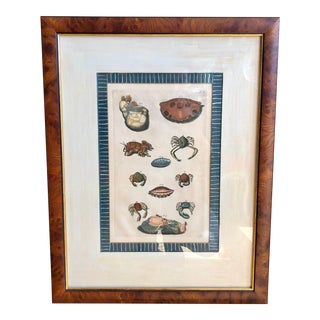 Antique 18th C Engraving W Crustacean & Shells by Trowbridge Gallery For Sale