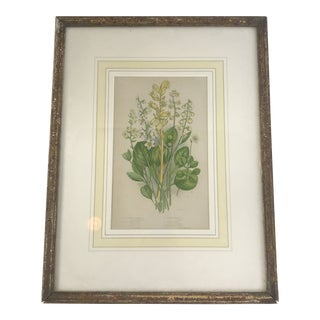 Early 20th Century Framed Botanical in Yellows With Custom Matting and Delicate Frame For Sale
