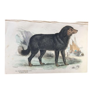 19th Century Jardine Newfoundland Dog Engraving