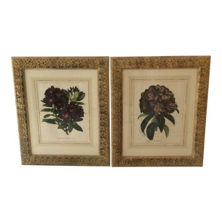 Original Botanical Framed Prints - a Pair For Sale
