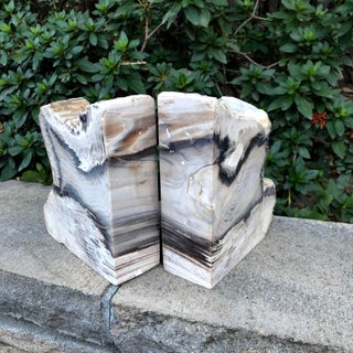 Fossilized Petrified Wood Bookends - a Pair Preview