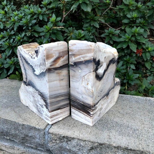 This is the most stunning pair of petrified wood bookends that I have ever seen. Quite large and heavy to hold up even the...