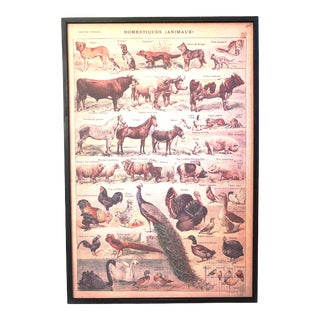 Vintage French 'Domestiques Animaux' Children's Teaching Poster, Framed For Sale