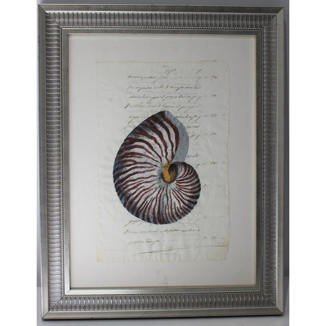 Blue Hand Painted Nautilus Shell on Parchment For Sale - Image 8 of 10