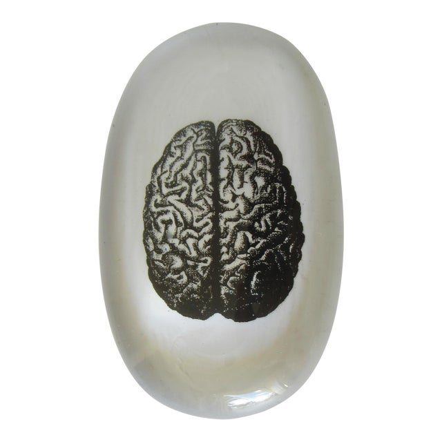 Glass Art Paperweight With Image of Brain For Sale