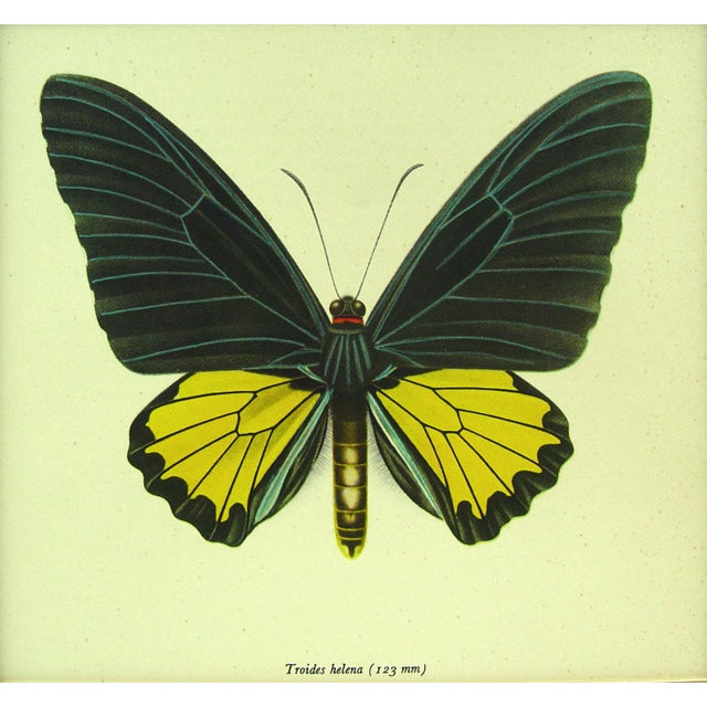 Butterfly Lithograph Circa 1950 For Sale