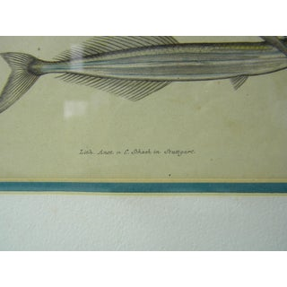 Antique Traditional Fish Print Preview