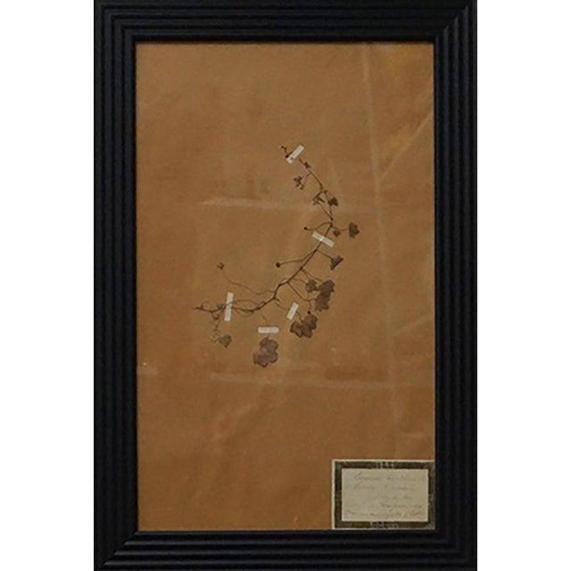 Paper French Framed Botanicals - Set of 8 For Sale - Image 7 of 10