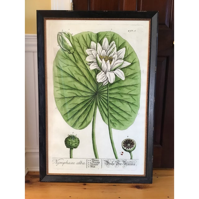 Large Turpin Pierre Chaumeton Flore Medicale Print, Framed For Sale - Image 13 of 13