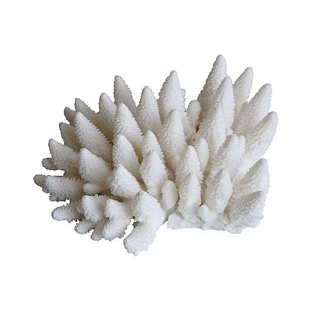 Coral Large Natural Ocean Sea White Coral Specimen For Sale - Image 7 of 7