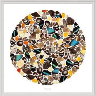Metamorphic, Framed Artwork For Sale