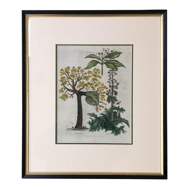 English Botanical Lithograph - Image 1 of 5