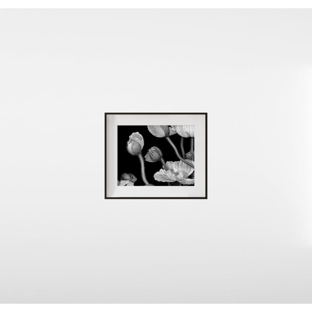 """Contemporary """"Poppies II"""", Contemporary Framed Photograph by Jean Karotkin For Sale - Image 3 of 5"""