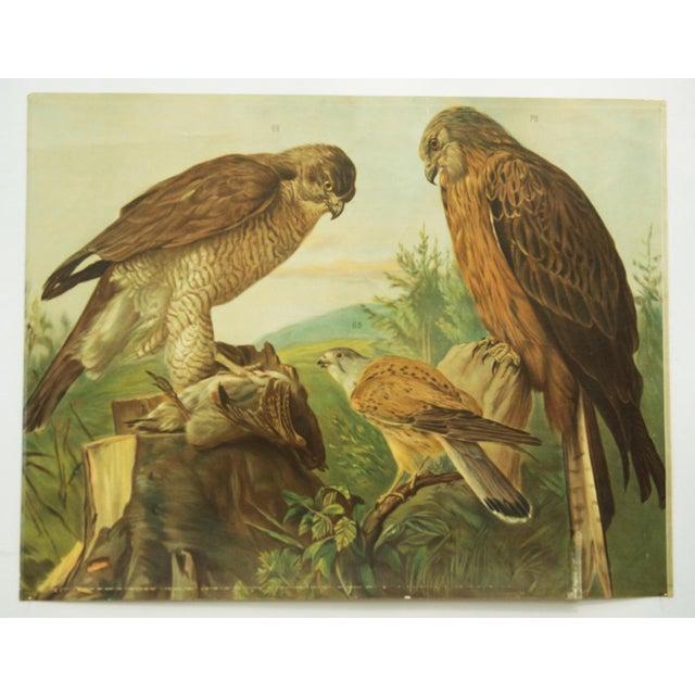 1960s German birds of prey school poster For Sale - Image 5 of 7