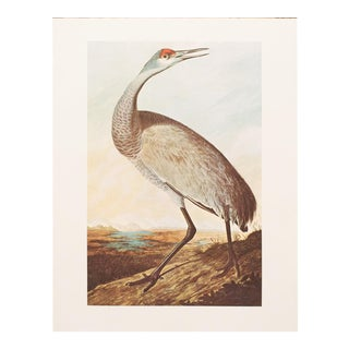 1960s Vintage Audubon Sandhill Crane Reproduction Lithograph Print For Sale