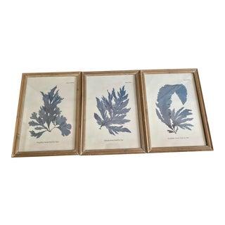 Blue Coral Motif Prints, S/3 For Sale