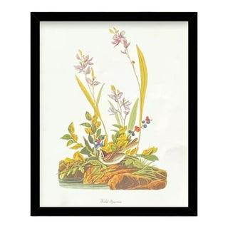 Custom Black Wood Frame of Authentic Vintage John James Audubon Field Sparrow Bird & Botanical Print For Sale