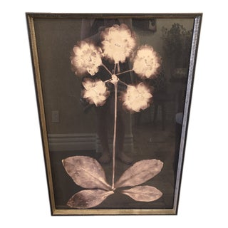Soicher Marin Custom Framed Floral Print For Sale