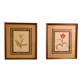 Circa 1929 Framed Antique Tulip Botanical Prints - A Pair