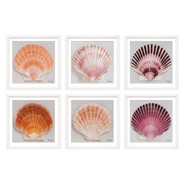 """2010s Trowbridge Giclees """"Shells"""" by Ben Wood Set of 6 For Sale - Image 5 of 5"""