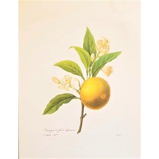 Pierre-Joseph Redouté Reproduction Orange Blossom Botanical Print For Sale