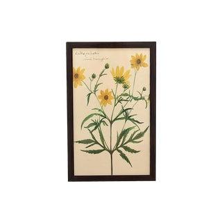 """""""Reverend's Floral Study"""" Framed Botanical Marigold Print For Sale"""