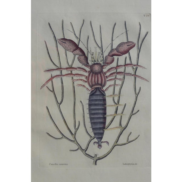 Nautical The Sea Hermit Crab by Catesby, 1815 For Sale - Image 3 of 6