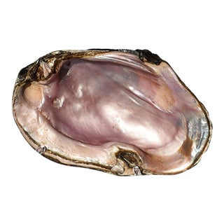 Mid 20th Century Oyster Shell Catchall For Sale