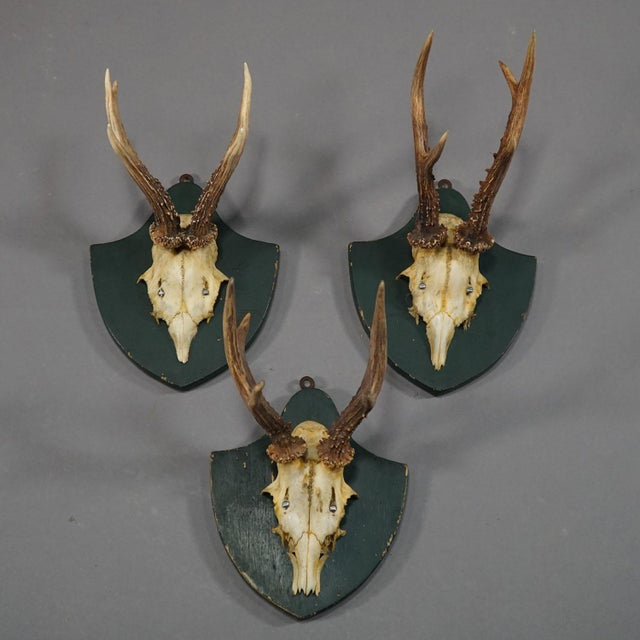 Mid 19th Century Six Large Antique Deer Trophies on Wooden Carved Plaques Ca. 1860 For Sale - Image 5 of 8