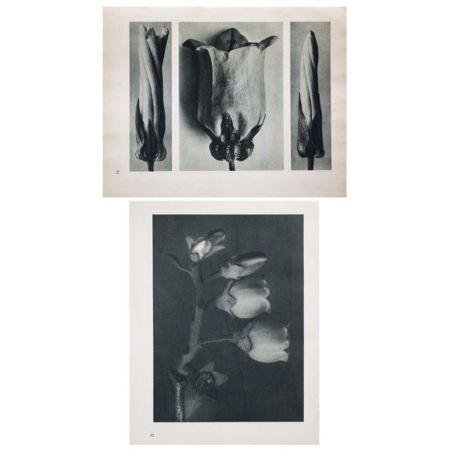 Karl Blossfeldt Double Sided Photogravure N91-92 For Sale