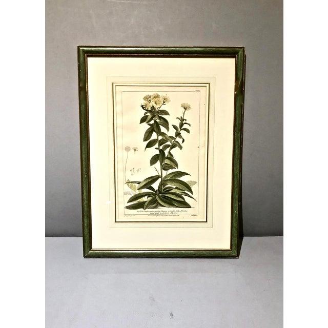 Boho Chic 18th C. Botanical Engravings - Set of 4 For Sale - Image 3 of 10