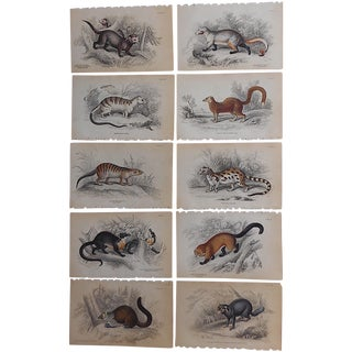 Antique Hand-Colored Mammal Engravings - Set of 10 For Sale
