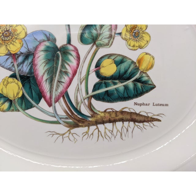 Shabby Chic 1970s English Enoch Wedgwood Tuns Botanical Nuphar Luteum Serving Platter For Sale - Image 3 of 9