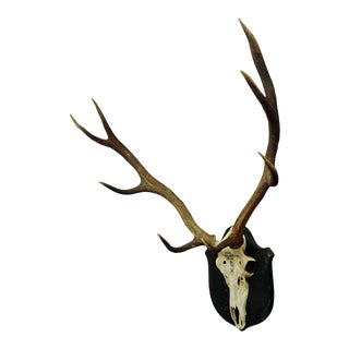 Antique Black Forest Deer Trophy From Salem - Germany 1876 For Sale