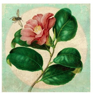 Antique Wasp & Flower Archival Print