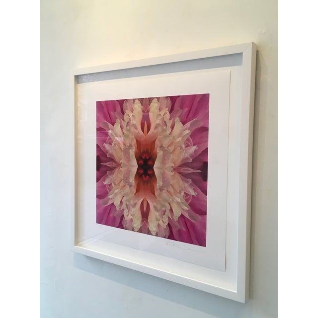 """Abstract """"Laced I"""" Pink, Yellow Flower Botanical Color Limited Edition Photograph Framed For Sale - Image 3 of 3"""