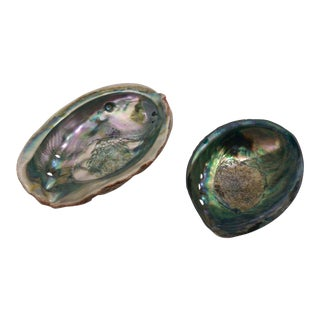 Small Abalone Sea Shells - Pair For Sale