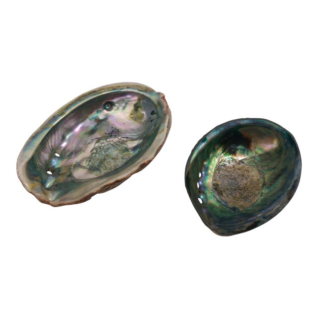 Small Abalone Sea Shells - Pair - Image 1 of 9